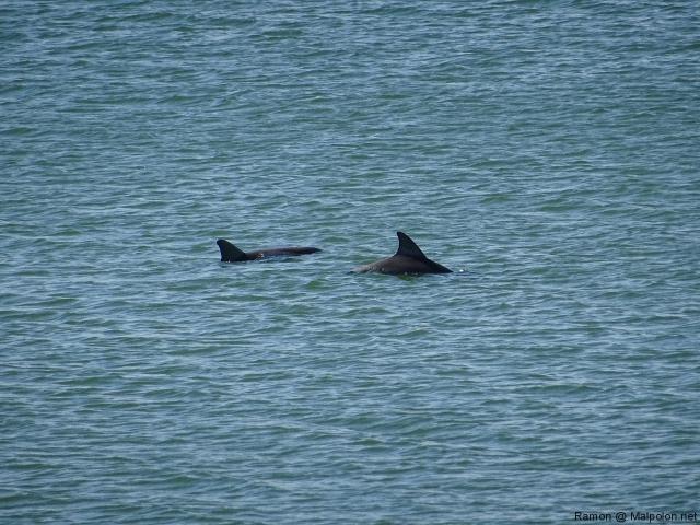 dofins_2