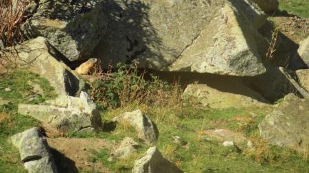 2_marmota