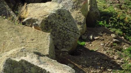 4_marmota