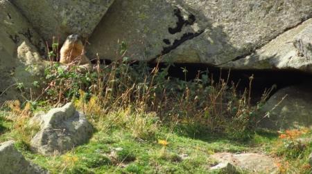 5_marmota