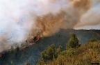 """1 0001 -- Durant els anys 2004 i 2005 es van produir alguns incendis a Castellbisbal, sortosament no tan grans com els del 1994.  <a href=""""http://www.malpolon.net/reportatge-incendis-a-castellbisbal-2004-2005/"""">Podeu llegir l'entrada sobre aquestes fotografies al blog aquí.</a>"""