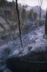 """dia 0333 -- Durant els anys 2004 i 2005 es van produir alguns incendis a Castellbisbal, sortosament no tan grans com els del 1994.  <a href=""""http://www.malpolon.net/reportatge-incendis-a-castellbisbal-2004-2005/"""">Podeu llegir l'entrada sobre aquestes fotografies al blog aquí.</a>"""