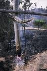 """dia 0342 -- Durant els anys 2004 i 2005 es van produir alguns incendis a Castellbisbal, sortosament no tan grans com els del 1994.  <a href=""""http://www.malpolon.net/reportatge-incendis-a-castellbisbal-2004-2005/"""">Podeu llegir l'entrada sobre aquestes fotografies al blog aquí.</a>"""