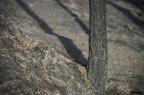 """dia 0356 -- Durant els anys 2004 i 2005 es van produir alguns incendis a Castellbisbal, sortosament no tan grans com els del 1994.  <a href=""""http://www.malpolon.net/reportatge-incendis-a-castellbisbal-2004-2005/"""">Podeu llegir l'entrada sobre aquestes fotografies al blog aquí.</a>"""