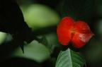 flor labios