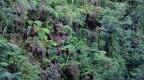 detall selva