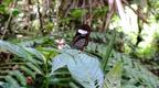 papallona transparent