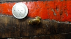Chontachaka amphibians 2